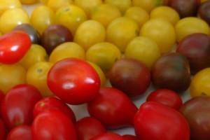 Tomatoes 2017b
