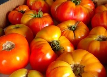 Tomatoes 2017c